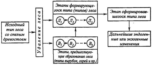 Схема формирования типов леса
