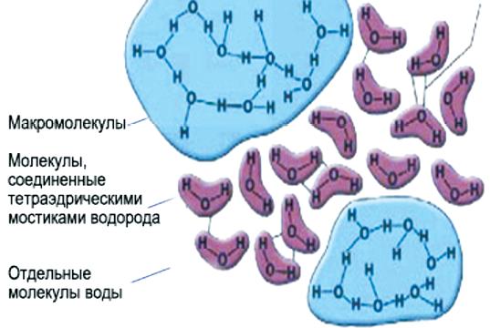 Льдообразная молекула воды